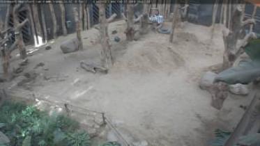 Náhledový obrázek webkamery Amersfoort- ZOO