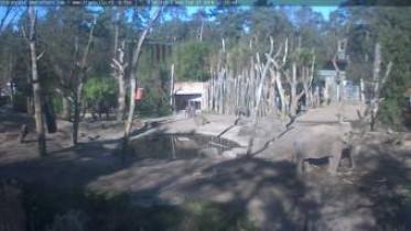 Náhledový obrázek webkamery Amersfoort - ZOO 2