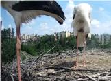 Náhledový obrázek webkamery Třebíč čápi