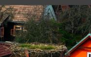 Náhledový obrázek webkamery Pribylina - čápi