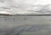 Náhledový obrázek webkamery Rose Bay - Sydney